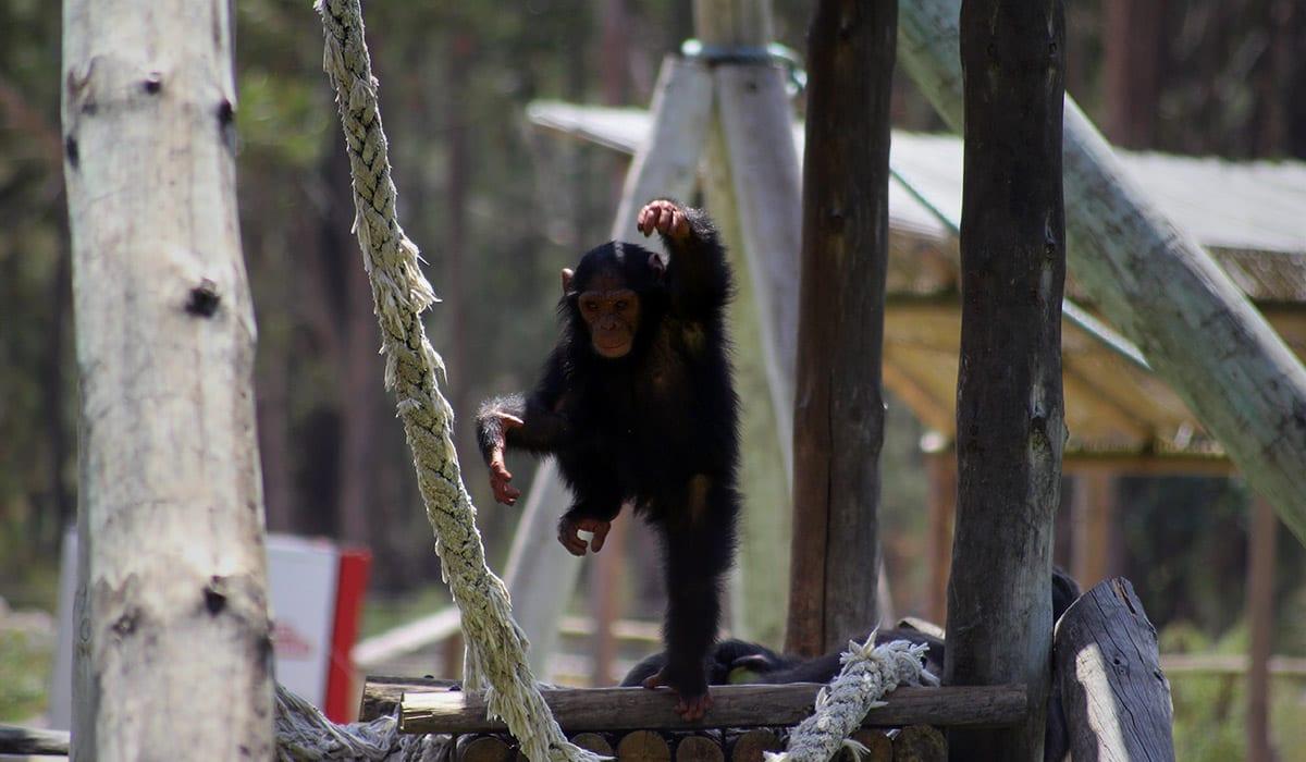 ilha dos primatas badoca