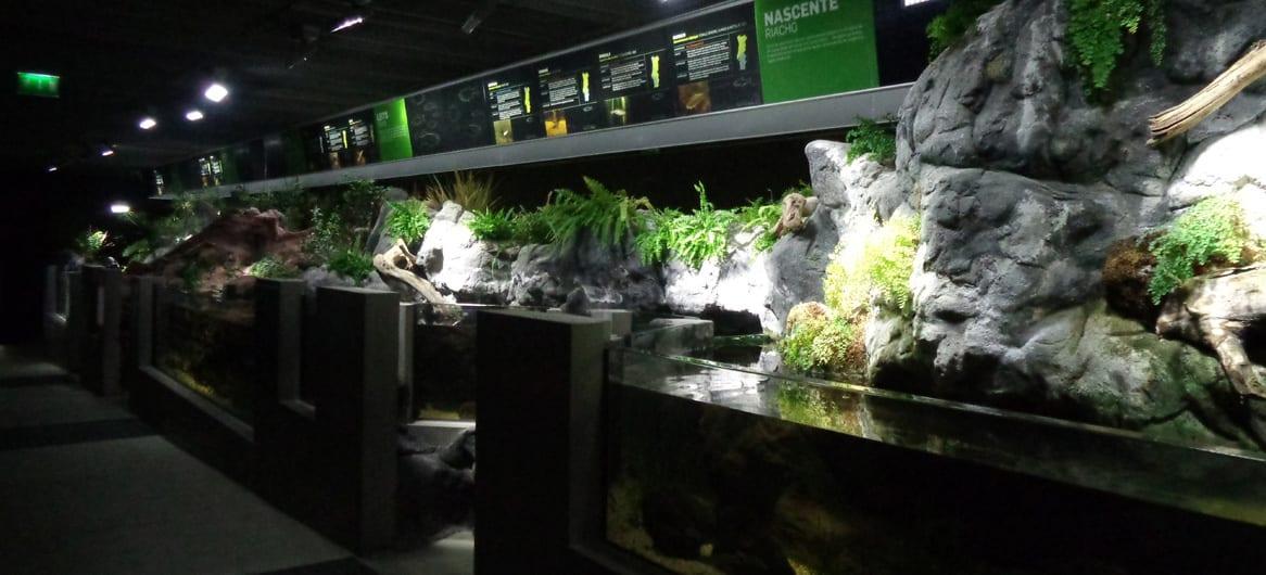 fluviário de mora exposição