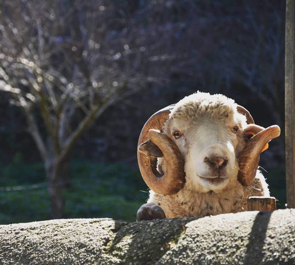armando villar ovelha