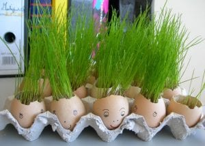 plantar em ovos