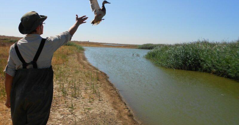EVOA Observação Aves