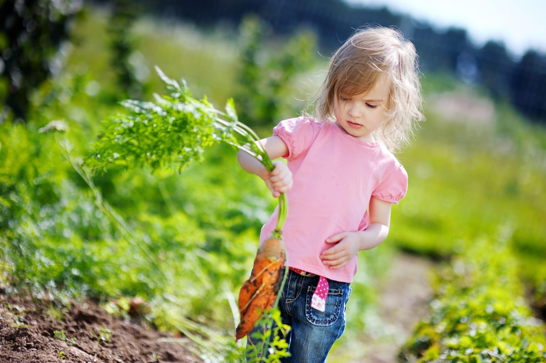 Mais vegetais à mesa, maior hidratação no Verão
