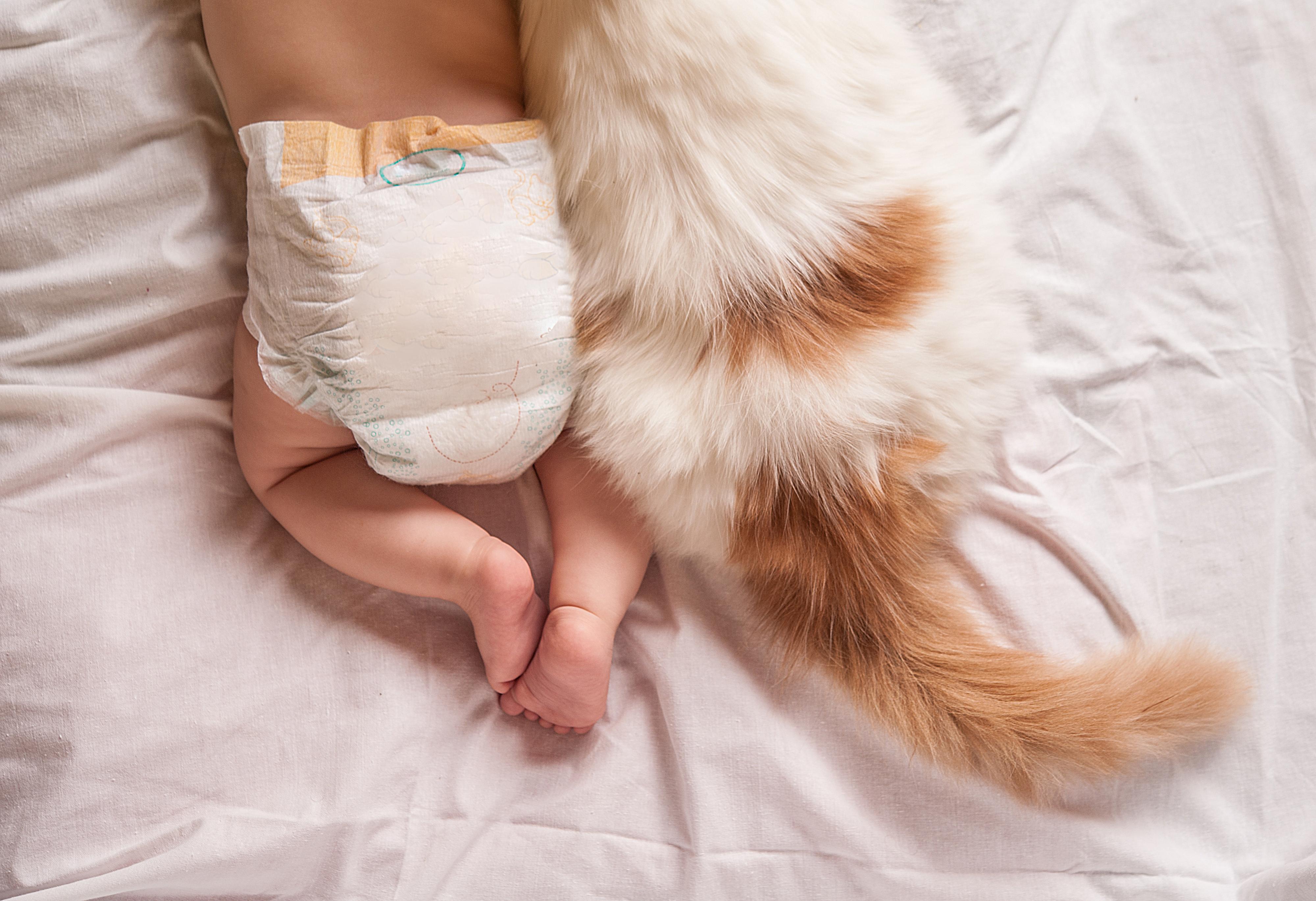 bebés e animais