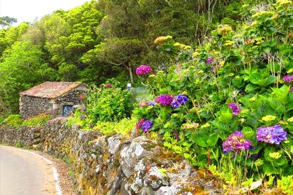 Natureza na Ilha Terceira