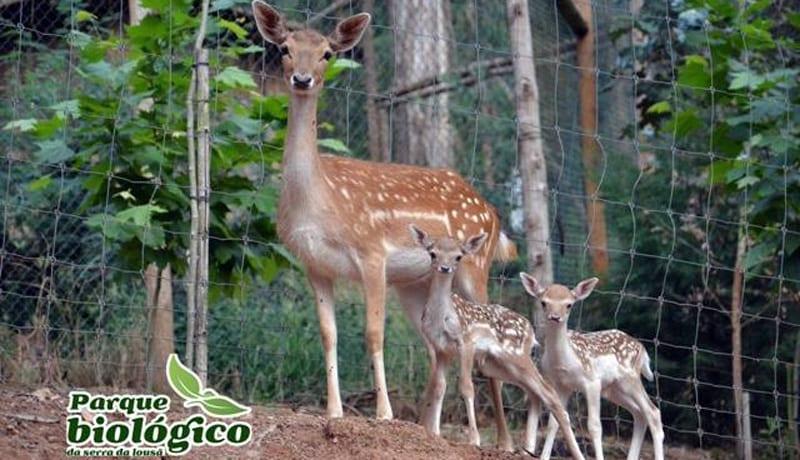 Parque-Biologico-serra-louca