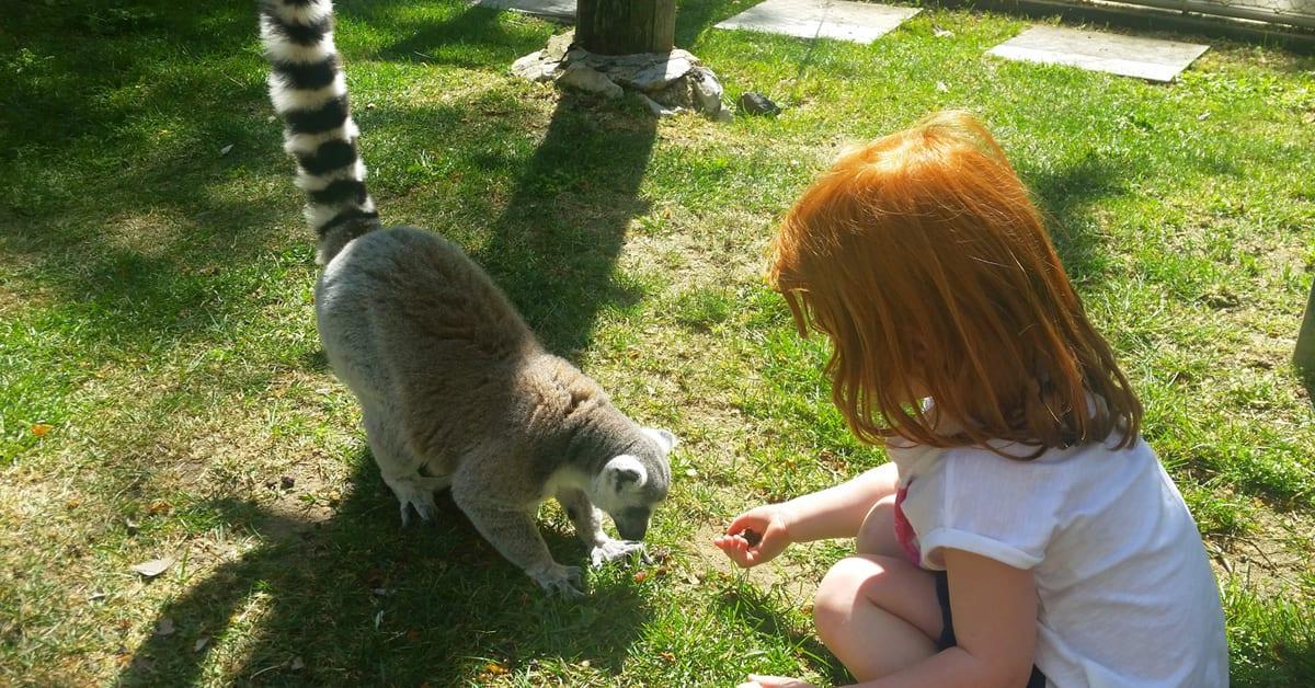 Sítios a visitar em Lisboa para quem ama animais