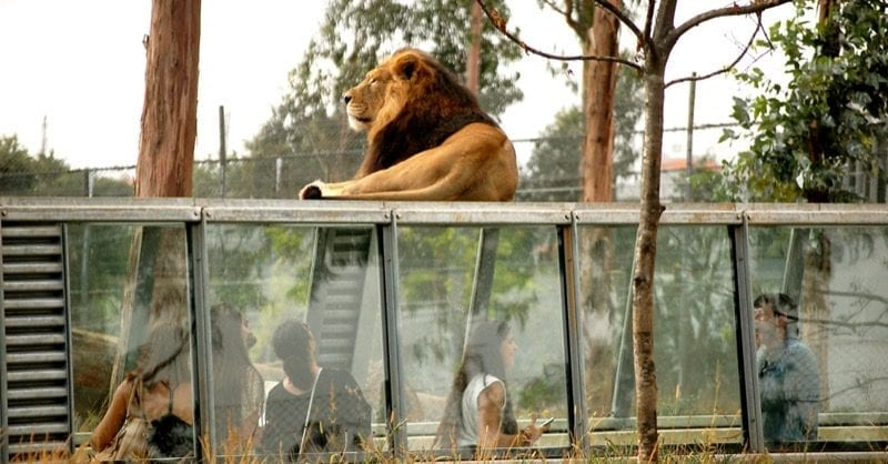 Zoo Santo Inácio: momentos selvagens para toda a família!