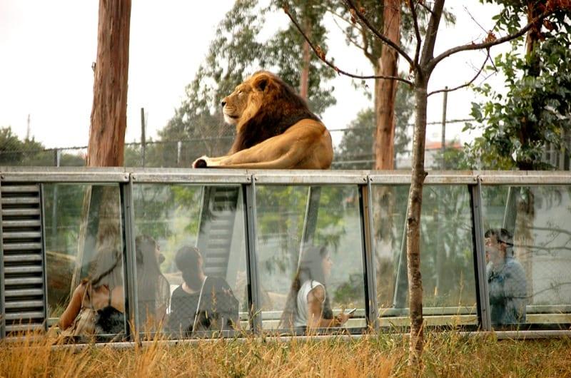 Sítios a visitar com crianças e toda a família: zoo santo inácio