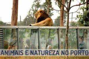 animais-natureza-porto