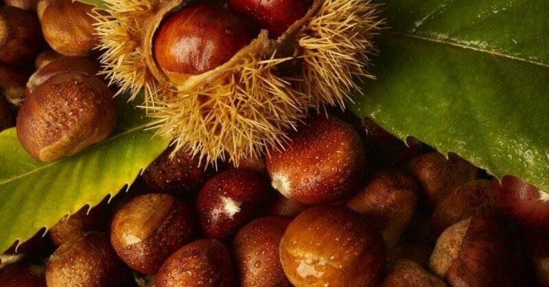 Outono e frutos secos (e uma receita deliciosa com castanhas e canela!)