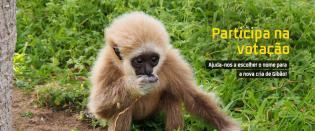 Ajude Jardim Zoológico escolher nome nova cria Gibão