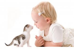 Animais Estimacão Bebés
