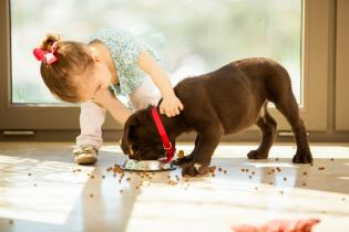 Criancas Animais Estimacão