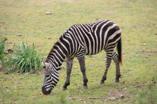 Diversão Badoca Safari Park