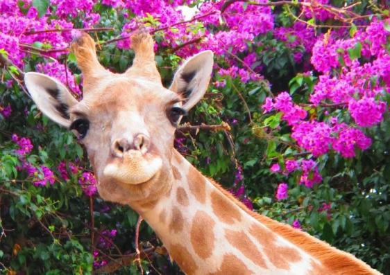 Jardim Zoológico agenda actividades Março