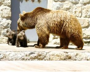 Jardim Zoológico celebra nascimento duas crias Urso-pardo
