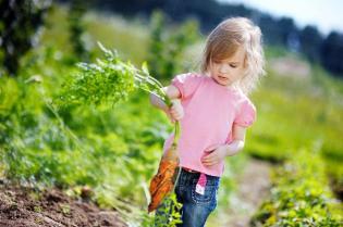 Mais vegetais à mesa, maior hidratacão Verão