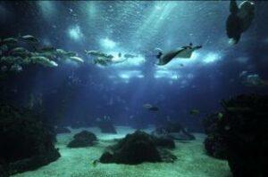 Mergulhe Oceanário