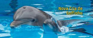 Nasceu golfinho Jardim Zoológico Lisboa