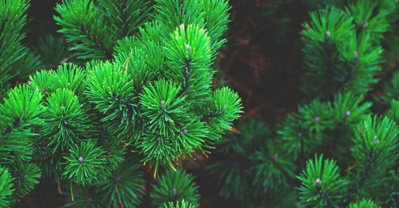 Natal Ecológico: dicas para uma quadra amiga do ambiente