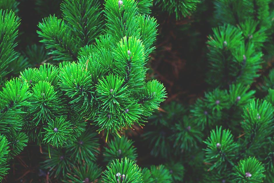 Dicas para um Natal amigo do Ambiente