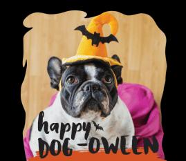 O Alegro Preparou Halloween Cãotástico