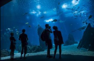 Oceanário Lisboa distinguido como melhor aquário mundo