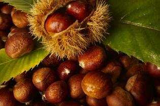 Outono frutos secos (e uma receita deliciosa castanhas canela)