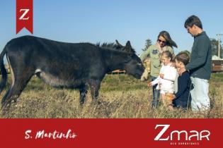 S. Martinho Zmar fimdesemana repleto actividades Kidz, desportivas contacto Natureza.