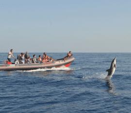 Venha Visitar os Golfinhos Dolphins Driven