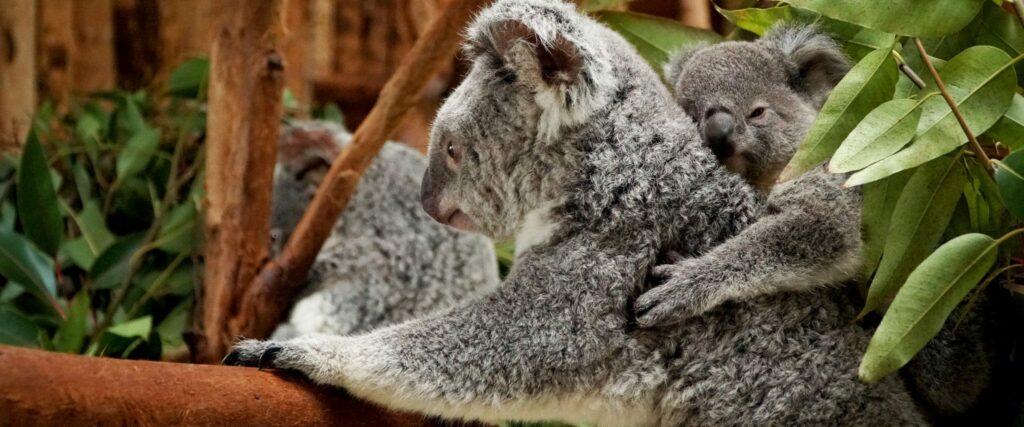 Dia do Pai - Jardim Zoológico