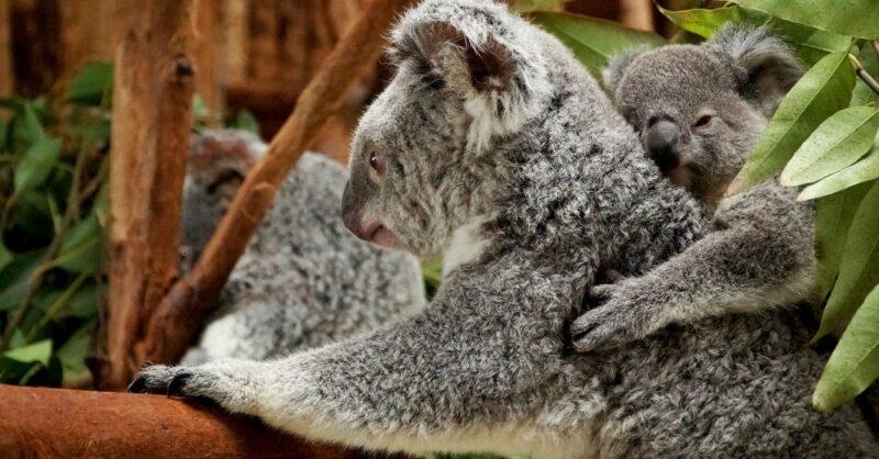 No Dia do Pai visite o Jardim Zoológico!
