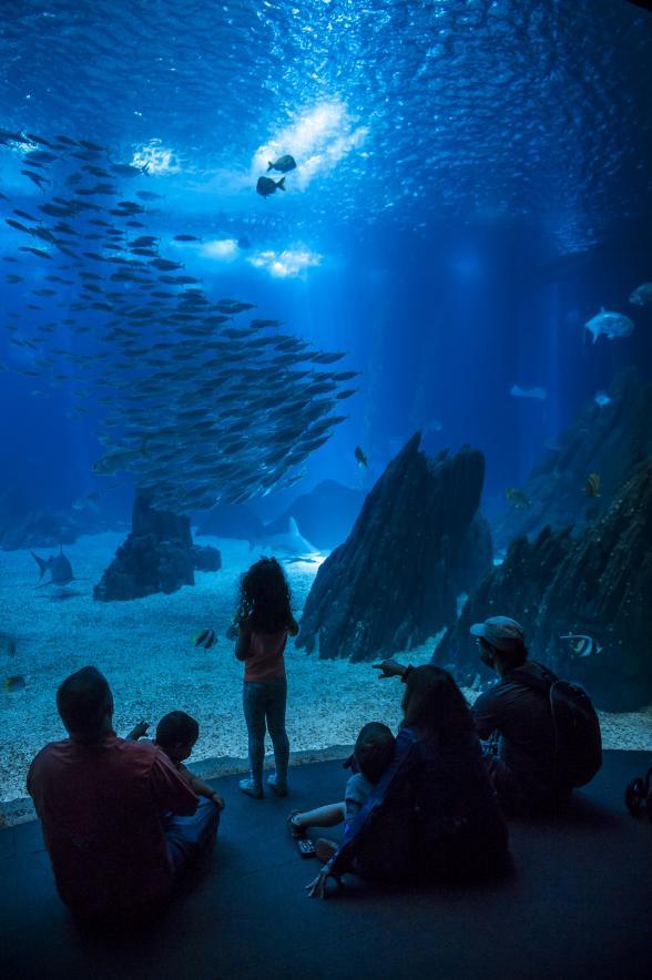 Passatempo Oceanário de Lisboa - Um oceano de alegrias que fazem sentido!