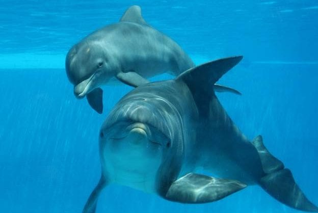 golfinhos-zoomarine