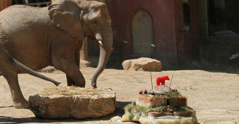 Aniverário do Jardim Zoológico