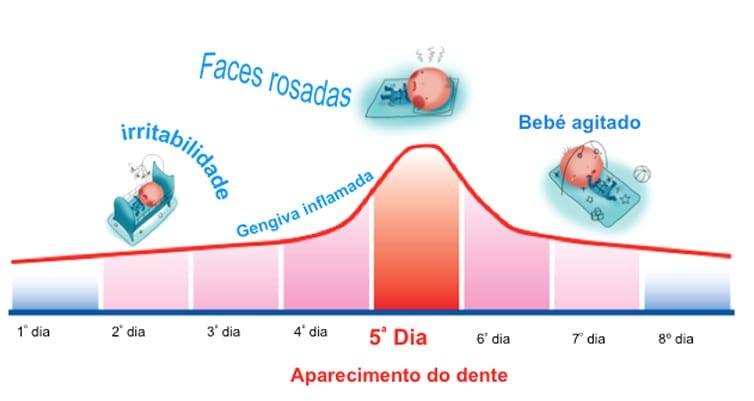 ciclo de nascimento do dente