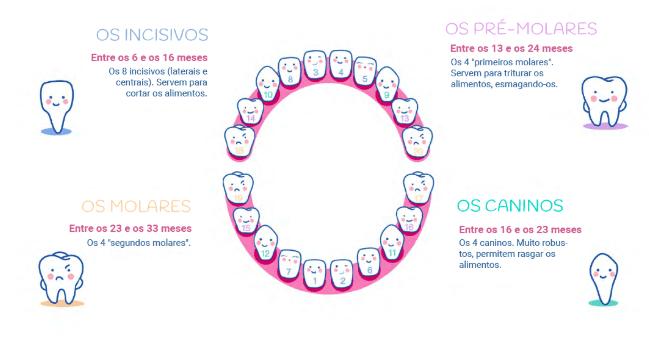 dentes - ordem de nascimento