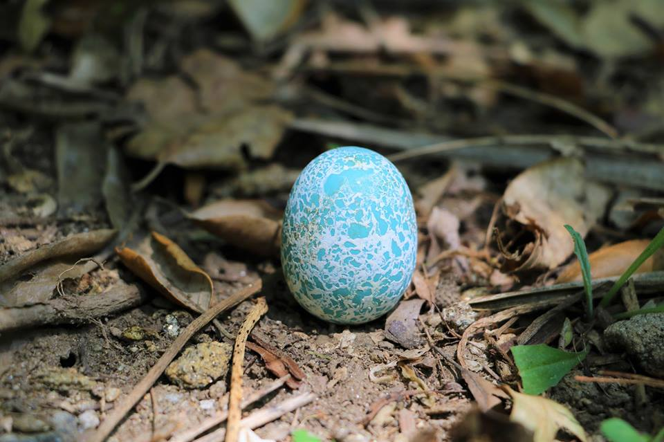 zoo lourosa ovo