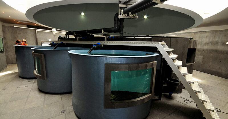 Aquário do Porto Pim: Estação de Peixes Vivos