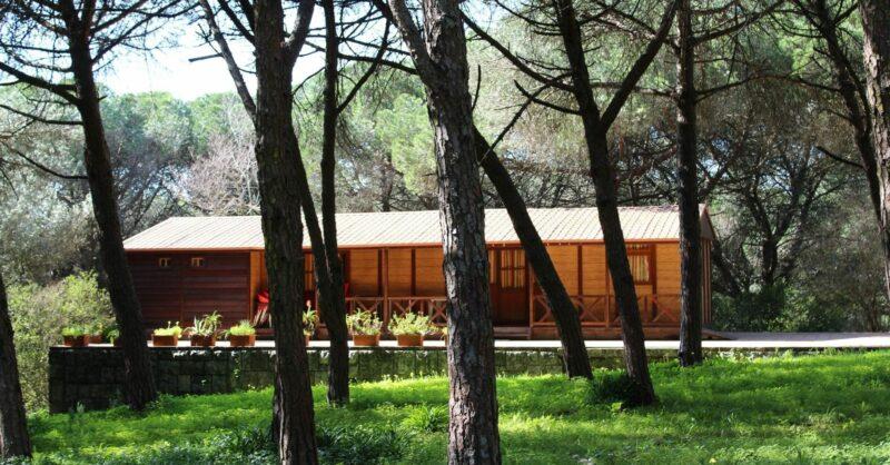 Lisboa Camping: a natureza do Parque de Campismo Monsanto
