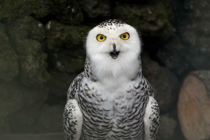 centro-reabilitação-aves-selvagens-pico
