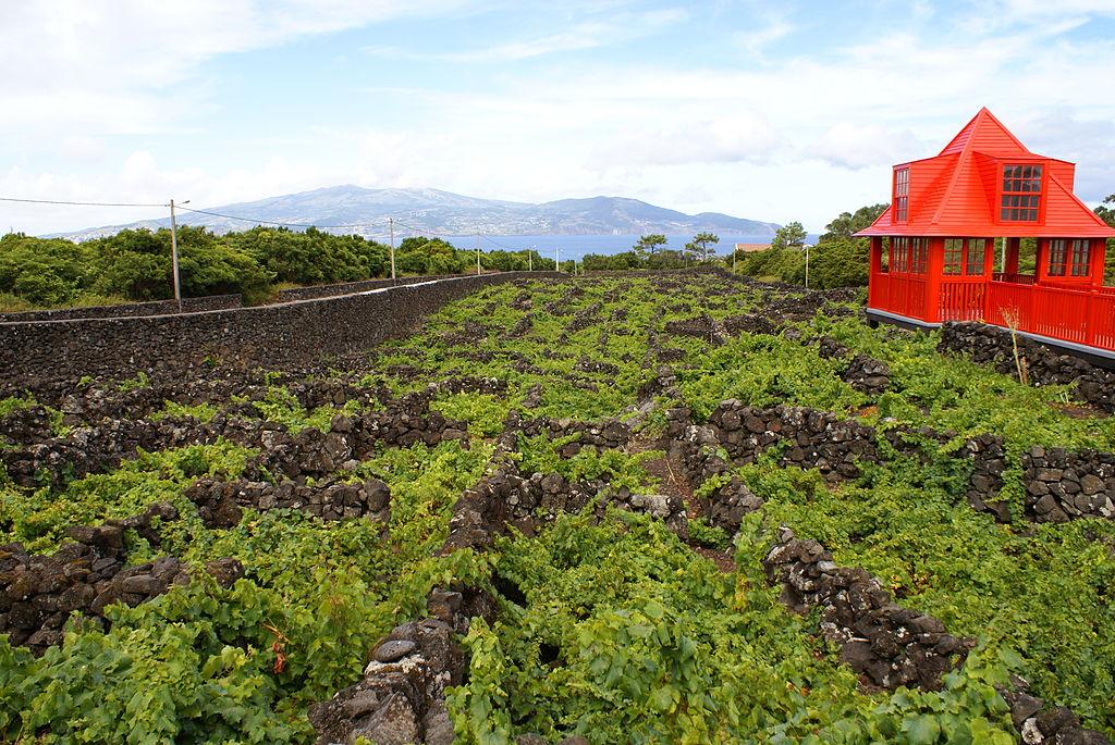 museu-vinho-pico