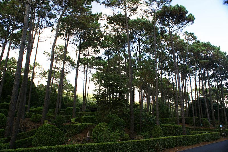 parque-florestal-sao-joao