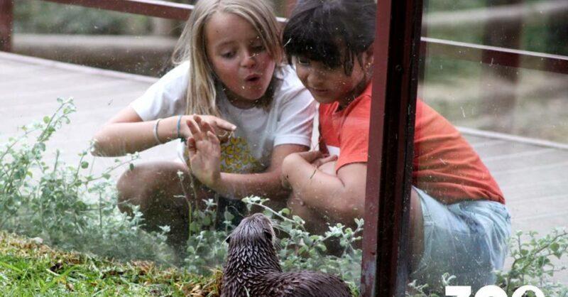 Programa Educativo do Zoo Santo Inácio 2020/2021
