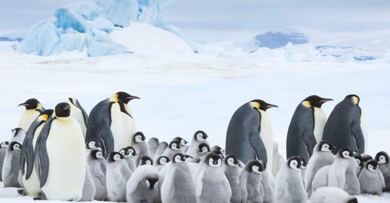 O Imperador – A Marcha dos Pinguins 2