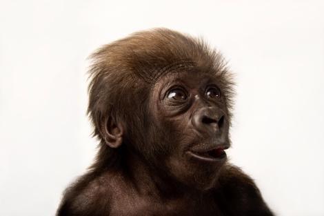 jardim zoologico macaco