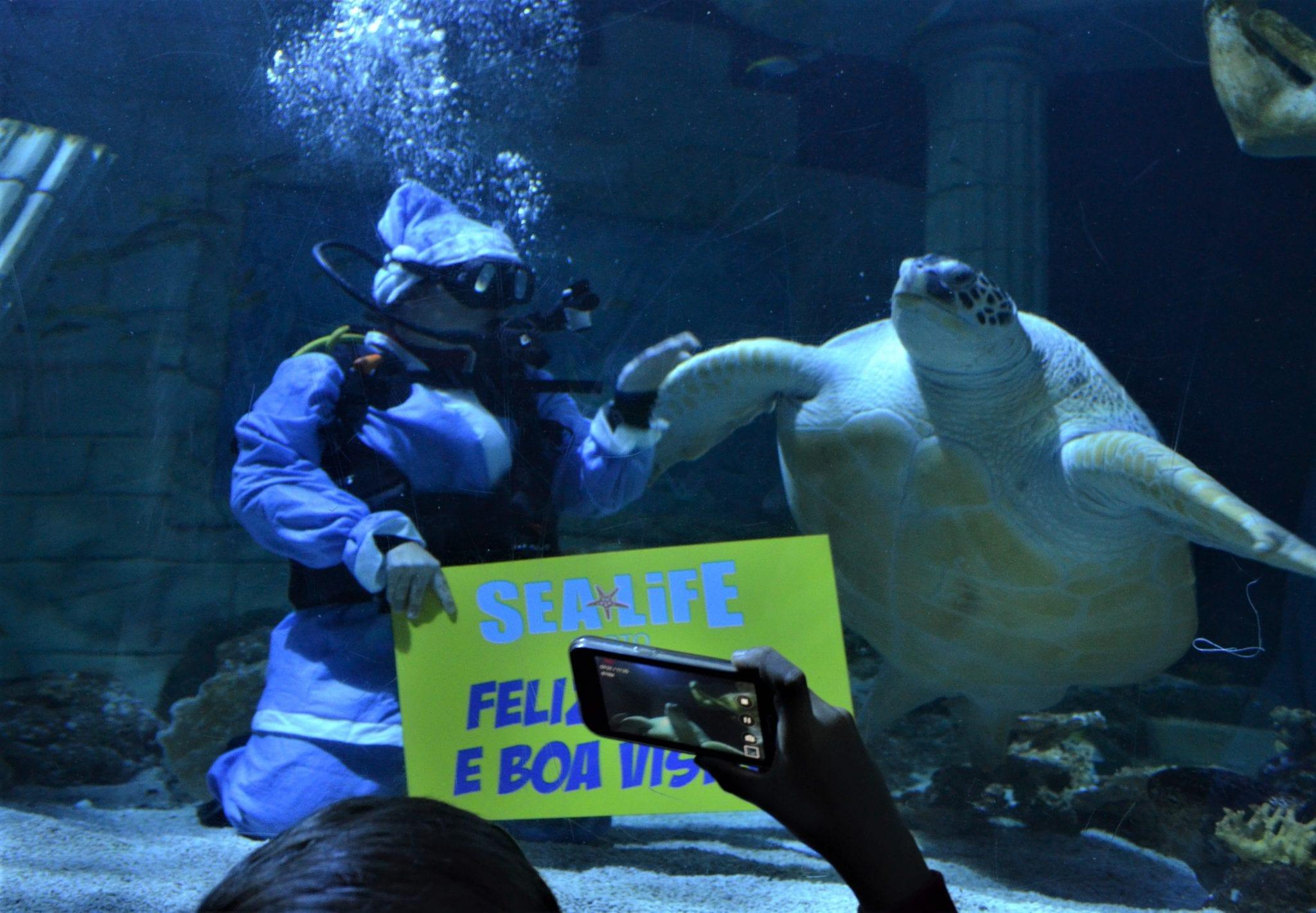 Pai Natal dos Oceanos e Tartaruga Mariza