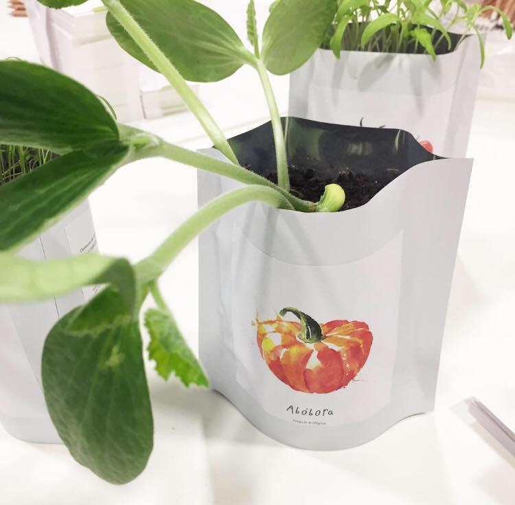 life in a bag abóbora