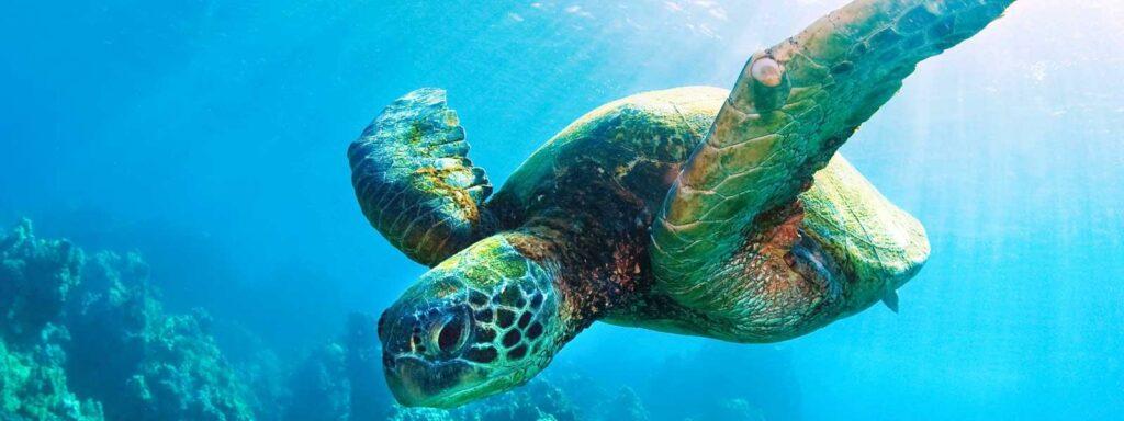 Tartaruga - Biodiversidade - Hora do Planeta