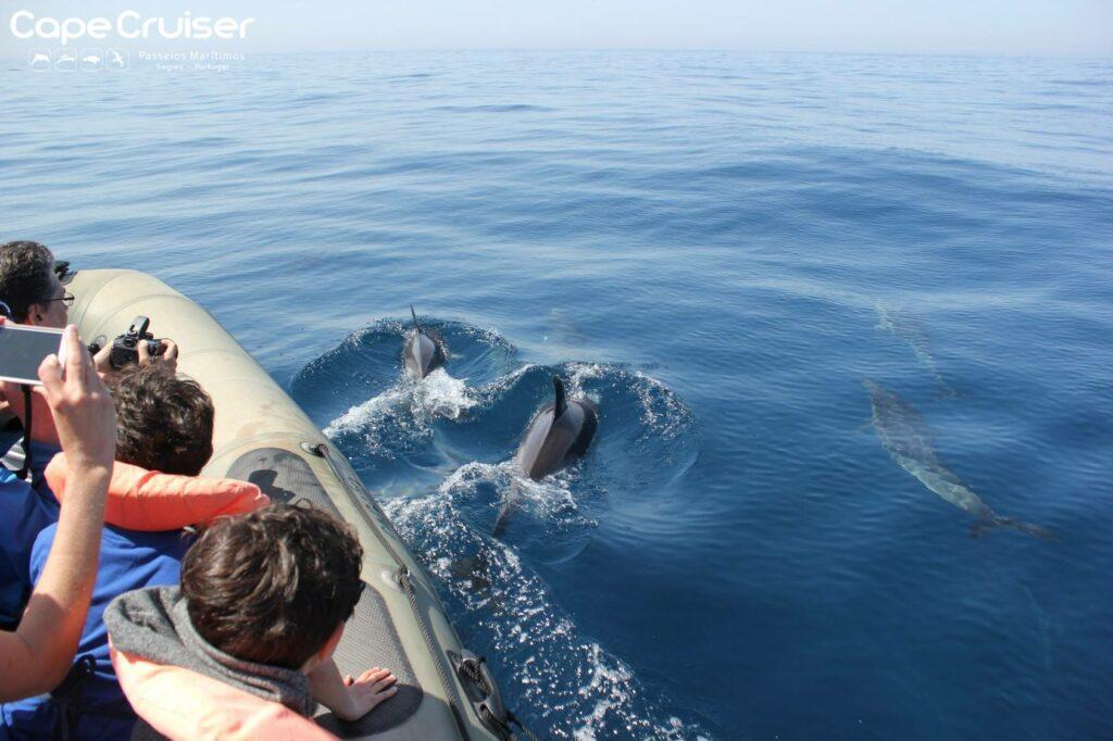 Golfinhos_Cape_Cruiser